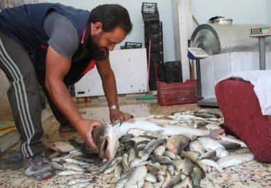 صيد السمك في نهر الفرات