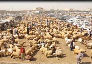 سوق الغنم بمنطقة الفرات مع فرح ناصيف