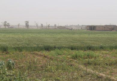أخبار الفرات- دعم كل المزارعين من قبل مديرية الزراعة بالبذار والدواء والمحروقات في الطبقة وريفها
