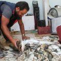 شنو هو وضع الثروة السمكية في الرقة وشنو هي القوانين اللي انطرحت لحمايتها؟