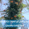 عودة الحياة الى حدائق الرقة ❤