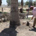 آخر أعمال دائرة الحدائق والتشجير مع مراسلنا عبد الرزاق في الرقة