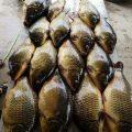 رحلة صيد على نهر الفرات 🐟