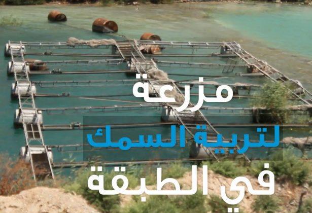 مزرعة تربية الأسماك في الفرات