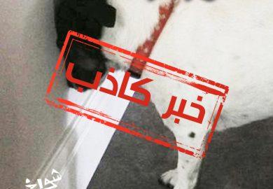 الحلقة 05 – الكلب المُعاقب