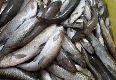 70 – الصيد الجائر