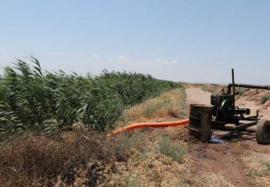 مشروع دعم مزارعي القمح في منطقة الجرنية مع محمود المبروك