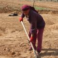 تقرير عن أعمال لجنة الزراعة في الطبقة أجرته مراسلتنا جوري مطر