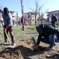 آخر أعمال بلدية الرقة بما يخص النظافة والتشجير مع مراسلنا عبد الرزاق