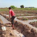 مكتب الإحصاء والتخطيط وطرق دعم قطاع الزراعة والمزارعين