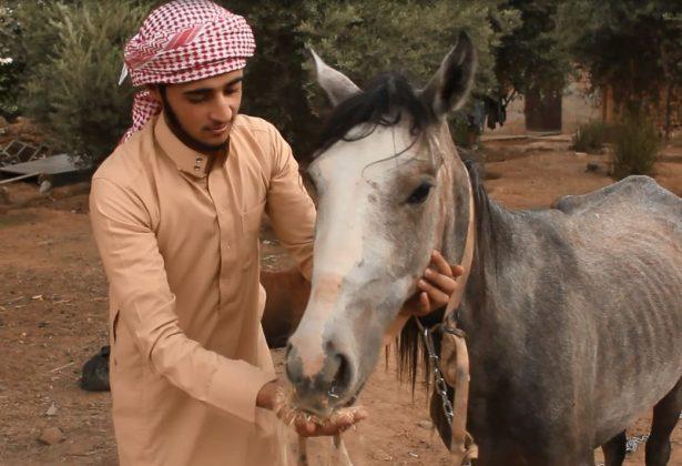 تربية الخيول