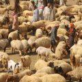 مكتب الثروة الحيوانية ومراقبة المراكز البيطرية في الرقة مع مراسلنا عبد الرزاق