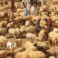 داء الانتروكسيما مع خبيرة التنمية الزراعية منار التركي