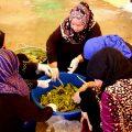 عمل مونة الملوخية وطقس عمل المونة مع أم فهد من الرقة