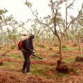 ظاهرة الاستخدامات الخاطئة للمبيدات الزراعية واسس الرش الصحيحة مع منار التركي
