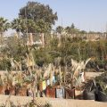 أهمية المشتل البلدي في الرقة كمصدر لأنواع كثيرة من الأشجار مع خبيرة التنمية الزراعية منار التركي