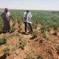 مشروع موسمكم خير التابع لمنظمة بيل ونتائج هذا المشروع مع خبيرة التنمية الزراعية منار التركي