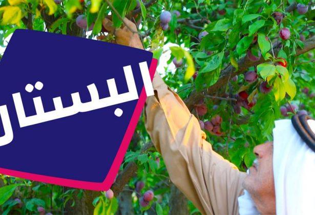 بستان أبو أسماعيل