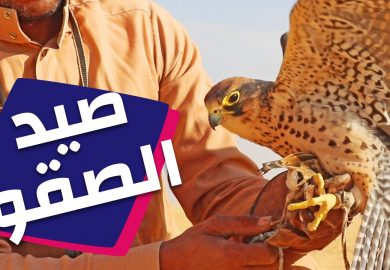 صيد الطير الحر في الرقة