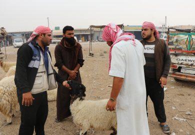 تعرف على المفردات والمصطلحات الشاوية لوصف الرعي والأغنام مع محمد الجاسم