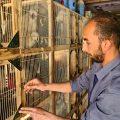 الدجاج الأوروبي الملون والأرانب الأليفة، عمل امتهنه الشاب سليمان لكسب رزقه