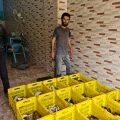 صيد السمك وبيعه، مهنة قديمة قدم الفرات انشغف بها الشاب محمد عامر منذ صغره
