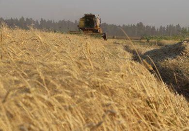 حصاد هذه السنة مقارنة بمواسم السنوات السابقة مع أبو اسماعيل من رقة السمرة