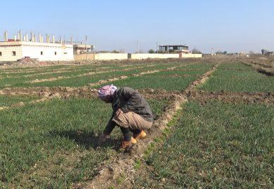 كيف اختلفت الزراعة والمزروعات بكسرة شيخ الجمعة