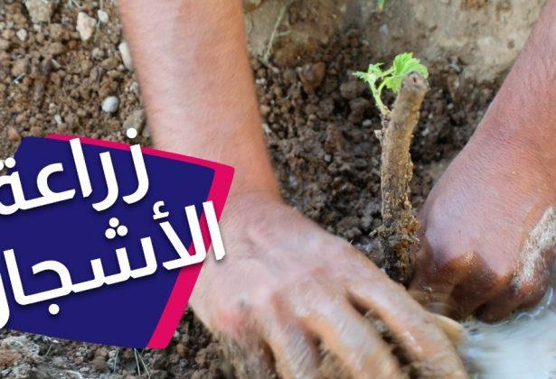 مبادرة عبدالله لتوزيع الغراس المجانية❤️